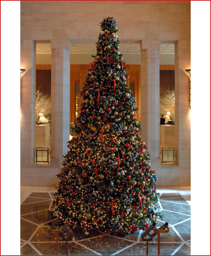 Olympia Pine Tower Tree Giant Sequoia Commercial Christmas Tree